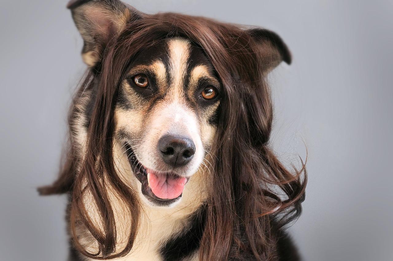 有田哲平しゃべくりの髪型が不自然でカツラ疑惑、髪の毛が増えたのか画像比較